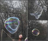 cova korova bubbles