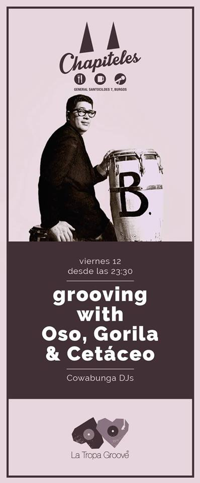 grooving_oso_gorila_cetaceo